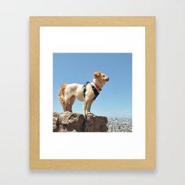 Wonder Dog in San Francisco Framed Art Print