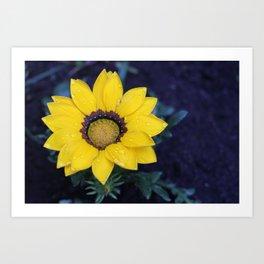 yellow flower in rain Art Print