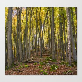 Autumnal Forest Canvas Print