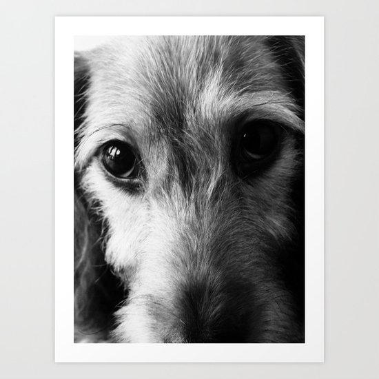 Puppy Love - Dachshund, Doxie, Dog, Pet, Pet Lover, Doxies, Eyes, Black & White Photography Art Print