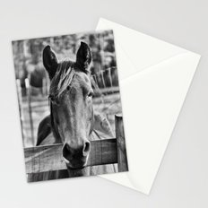 Waiting (Black and White Horse #1)  Stationery Cards