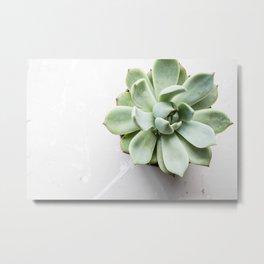 Simple succulent beauty Metal Print