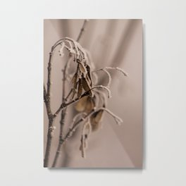Frosted maple seeds Metal Print
