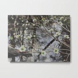 Dogwoods at the River Metal Print