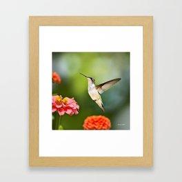 Hummingbird Hovering Framed Art Print