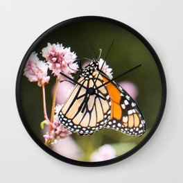 Monarch sipping nectar Wall Clock
