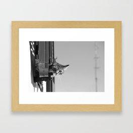 Curious Cat of Matera Framed Art Print