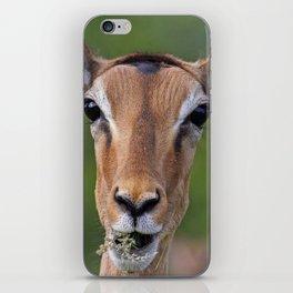 Surprise! Impala, Africa, wildlife iPhone Skin