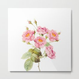 Vintage & Shabby Chic - Bunch of Pink English Roses Metal Print
