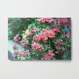 Longwood Gardens Autumn Series 240 Metal Print