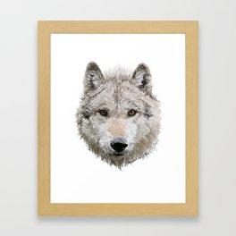 Grey Wolf Framed Art Print