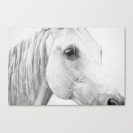 Horse Photography | Wildlife Art | Farm animal | Horse Eye Closeup | Animal Photography Canvas Print