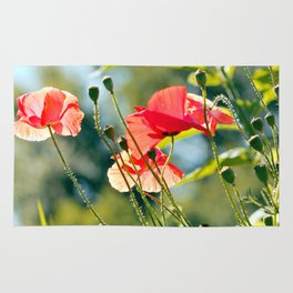Backlit poppies Rug