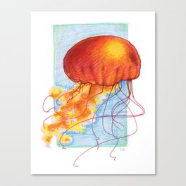 Sea Nettle - Jellyfish Canvas Print