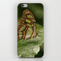 malachite iPhone & iPod Skins featuring Malachite Butterfly by Cindi Ressler Photography