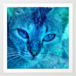 cats eyes: ischia Art Print