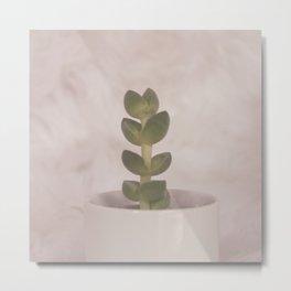 sweet cactus 2 Metal Print