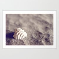 seashell Art Prints featuring Seashell by Dena Brender Photography
