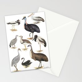 Neville W. Cayley - What Bird Is That? (1931) - Australia's Largest Birds Stationery Cards