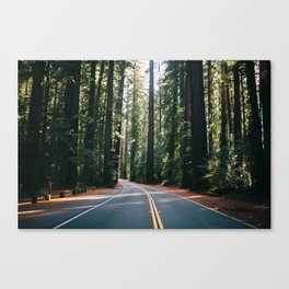 Avenue of the Giants Canvas Print