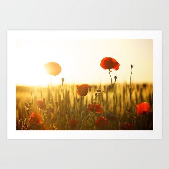 Sunset tulipe Art Print