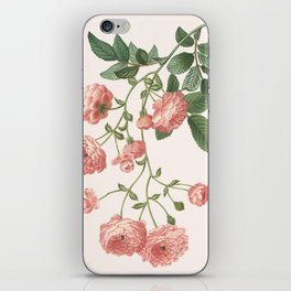 Rosa Multiflora iPhone Skin