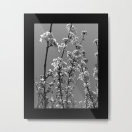 Tree Blossoms in Black and White Metal Print