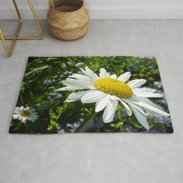 Close Up Common White Daisy With Garden Rug