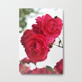 Chanson des roses Metal Print