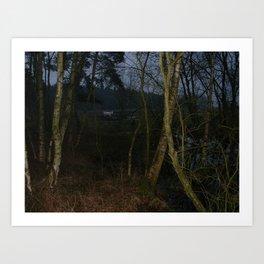 Swamp bullock Art Print