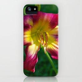 Raspberry and gold daylily flower - Hemerocallis 'Liberty Banner' iPhone Case