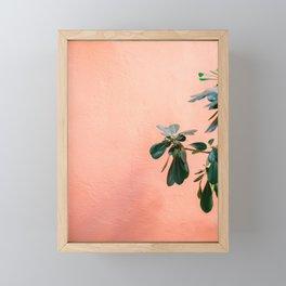 Green on Coral II | Botanical Rovinj fine art photography print | Croatia travel  Framed Mini Art Print