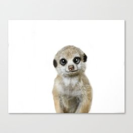 Meercat baby animal Canvas Print