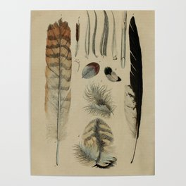 Naturalist Feathers Poster