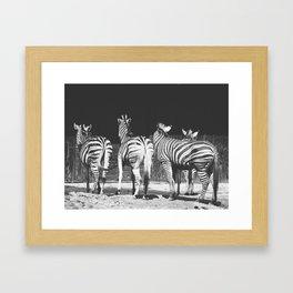 Behind A Zebra Framed Art Print