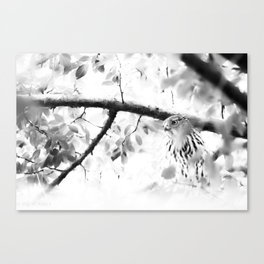 PLOTTING Canvas Print