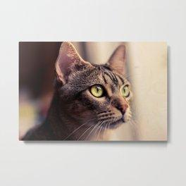 Tristan, el gato. Metal Print