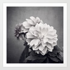 Black and White Dahlia Flower Photography, Grey Floral, Gray Neutral Nature Petals Art Print