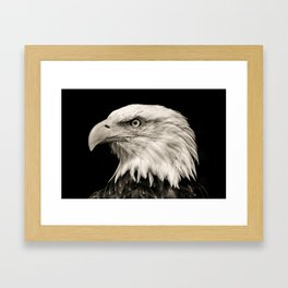 American Eagle Photography | Bird | Framed Art Print