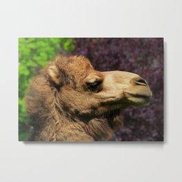 MM - Camel Metal Print