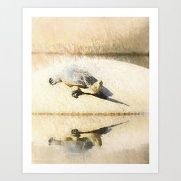 Hilaire's toadhead turtle Art Print