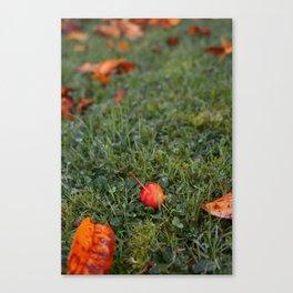 Autumn crab apple Canvas Print