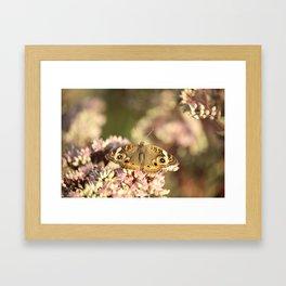 Buckeye Butterfly Macro Framed Art Print
