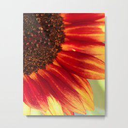 Sunflower the Color of Autumn Photography Metal Print