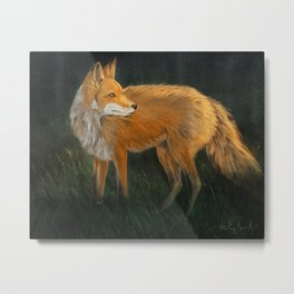 Curious Red Fox Metal Print