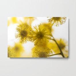 Acacia Flower IV Metal Print