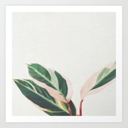 Pink Leaves III Art Print