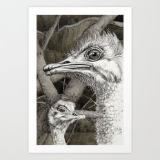 Ostriches G024 Art Print