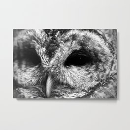 Oh Owl Metal Print