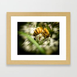 Pollen and a Bee. Framed Art Print
